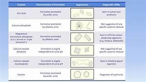 Interpretation Of The Urinalysis  Part 3
