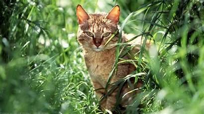 Cats Cat Wallpapers Depth Field Warrior Desktop