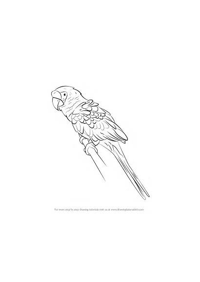 Macaw Draw Military Drawing Drawings Parrots Step