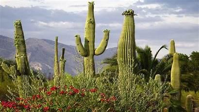 Arizona Wallpapers Phoenix Desktop Backgrounds 1080p