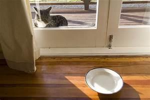 Türschutzgitter Mit Katzenklappe : kellerfenster mit katzenklappe tipps zum kauf ~ Whattoseeinmadrid.com Haus und Dekorationen