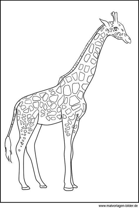 malvorlage giraffe  malvorlage giraffe ausmalbilder