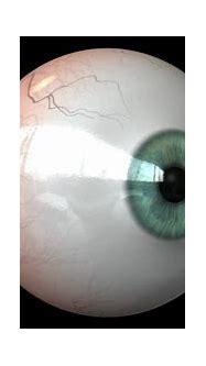 3D eye made in Maya - YouTube