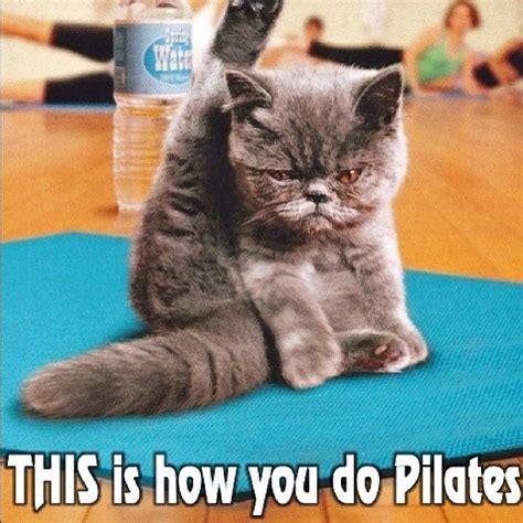 Cat Gym Meme - this is how you do pilates gym humor pinterest fitness jokes meme and gym
