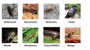 Schädlinge Im Haus : sch dlinge im haushalt das gro e krabbeln teil 2 ~ Lizthompson.info Haus und Dekorationen