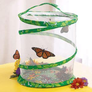 butterfly garden kit educational toys lillian vernon