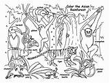 Rainforest Coloring Animals Fauna Animal Sketsa Gambar Sheets Layers Forest Printable Contoh Template Tropical Jungle Drawing Books Martinchandra Plants 600px sketch template
