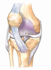 Unlabeled Blank Knee Joint Diagram