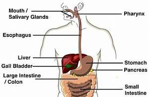 9 The Digestive System