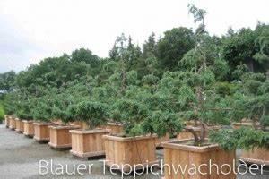 Baum Im Topf : holzprodukte f r den garten bonsai ~ Michelbontemps.com Haus und Dekorationen