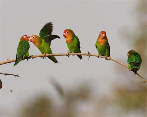 Love Birds Desktop Wallpaper