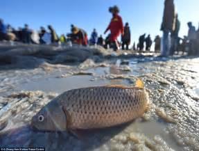 Seemingly endless haul of fish dragged from Chinese lake ...