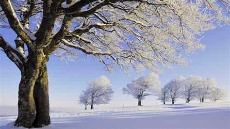 winter wallpaper  background image  id
