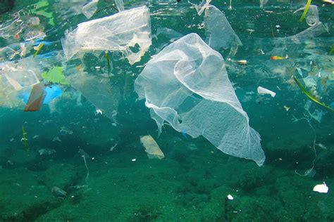 5 Marine Animals In Danger From Ocean Pollution