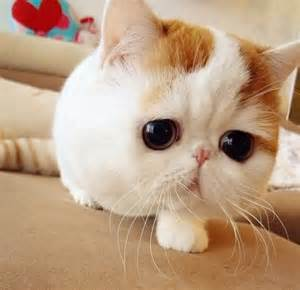cat marshmallows cats that are prettier than most humans