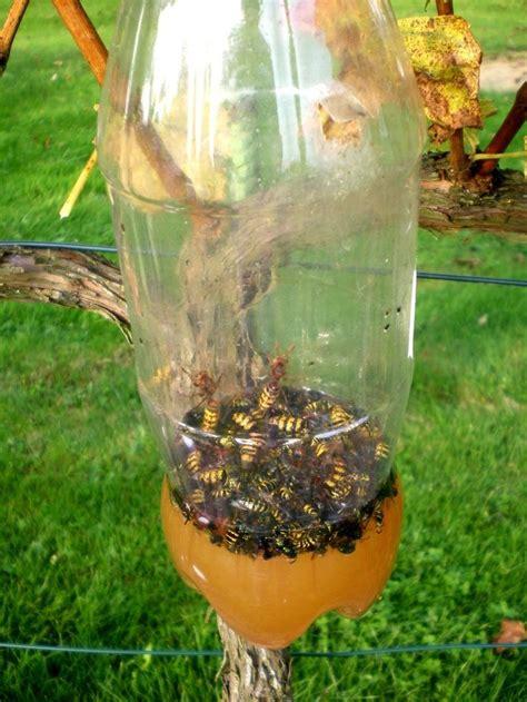 piege a guepe maison 1000 id 233 es sur le th 232 me pi 232 ges 192 gu 234 pes sur pi 232 ges abeilles pi 232 ges 192 mouches et
