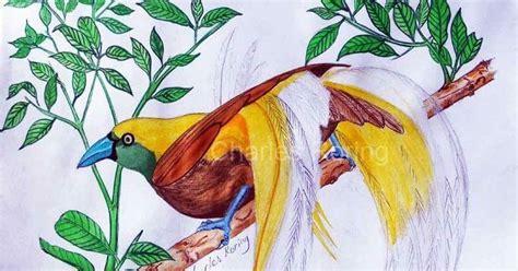 sketsa bercerita lukisan cat air burung surga