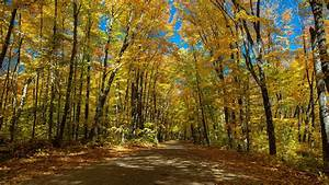 canada, ontario, road, tree, during, fall, hd, nature, wallpapers