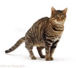 brown tabby cat on the floor photo wp13247