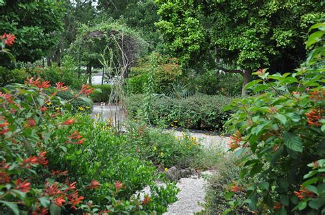 mounts botanical garden our gardens mounts botanical garden of palm