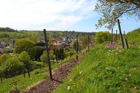 Atvērts Sabiles Vīna kalns - Sabiles pilsēta un Abavas pagasts