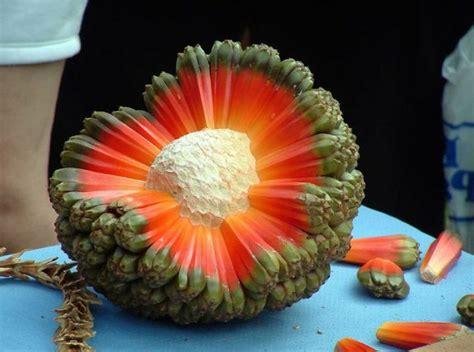 pinke küche tropische früchte und exotisches gemüse genießen