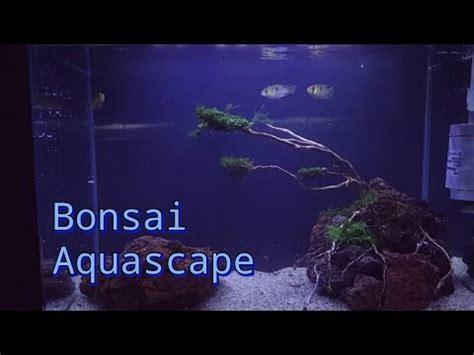 Tutorial Bonsai Aquascape Untuk Pemula Youtube