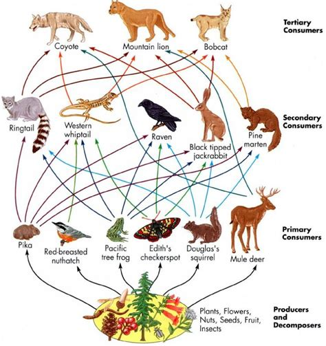 web cuisine 101 best images about food chains webs on