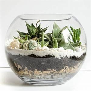 Sukkulenten Im Glas Pflanzen : sukkulenten im glas im blickfang kreative deko ideen mit pflanzen ~ Eleganceandgraceweddings.com Haus und Dekorationen