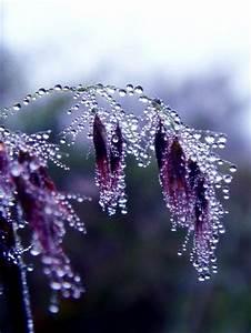 Dew on Pretty Purple Flowers - Micro | into the wild ...