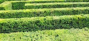 Dahlien Wann Pflanzen : heckenschnitt wann pflanzen f r nassen boden ~ Frokenaadalensverden.com Haus und Dekorationen