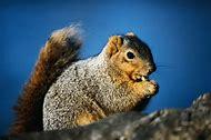 Squirrel Wild Animals