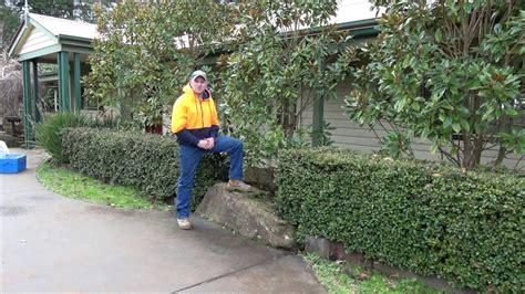gem magnolia hedge shapeyourmindscom
