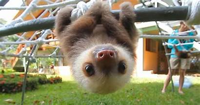 Sloths Sloth Smile Conversation Adorable Rescued Try