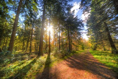 Beautiful Forest Path Wallpapers HD Photos for Free Download