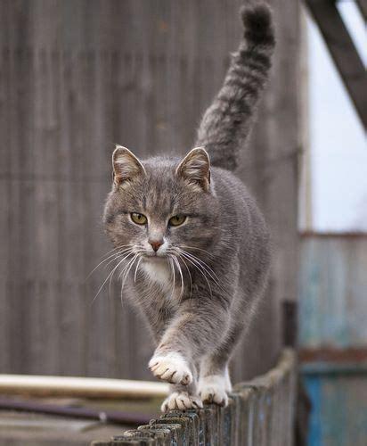 cat walking  fence luvbat