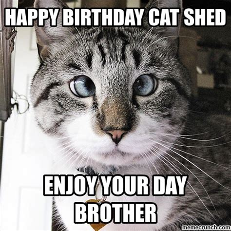 Cat Birthday Memes - happy birthday cat shed
