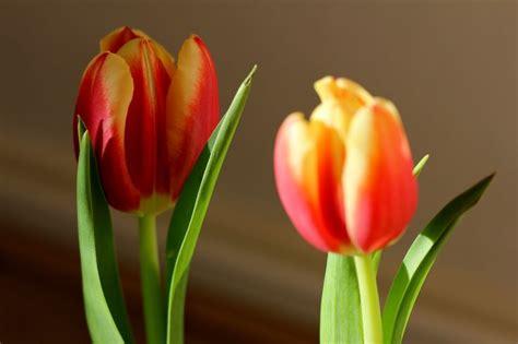 buren bloemen 117 beste afbeeldingen van bloemen