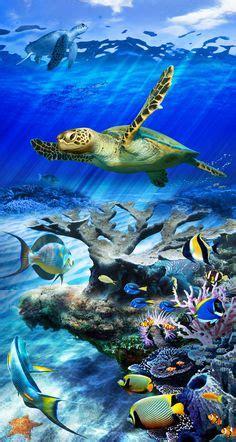 vollversion coral reef aquarium  screensaver