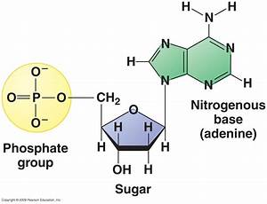 What Is Three Parts Of Nucleotide