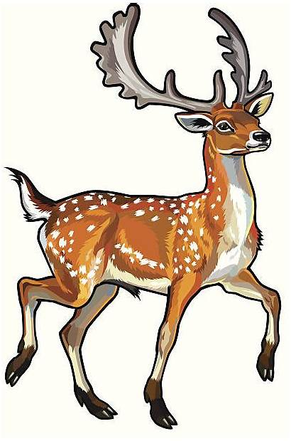 Deer Clipart Chital Fallow Daino Transparent Spotted