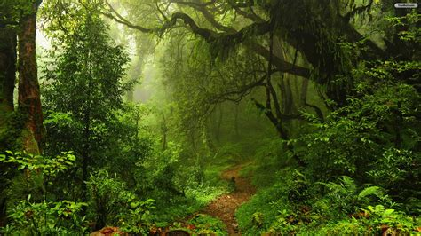 Wallpaper Of Green Forest by 75 Green Forest Wallpaper On Wallpapersafari