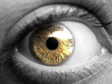 White Kitchen Gold Eye by Seeing The World In Black And White Achromatopsia