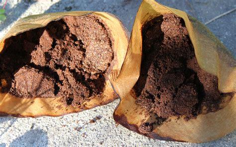 kaffeesatz als blumendünger für zimmerpflanzen kaffeesatz als g 252 nstigen bio d 252 nger verwenden beetfreunde de