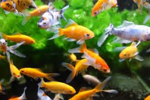 Cool Pet Fish
