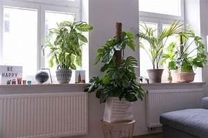 Fensterbank Dekorieren Wohnzimmer : pflanzen deko wohnzimmer ~ Markanthonyermac.com Haus und Dekorationen