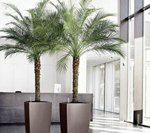 Como cuidar de uma palmeira - 7 passos