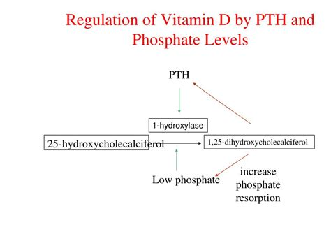 calcium phosphate test nkf kdoqi guidelines ppt calcium homeostasis parathyroid hormone