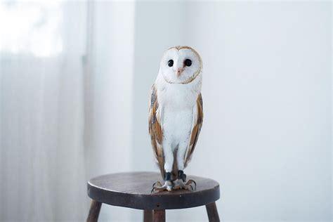 Do Owls Make Good Pets?