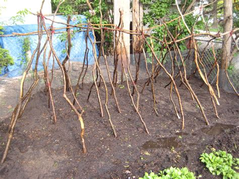 pole bean trellis the risk of is past now get to work 187 stuporglue org